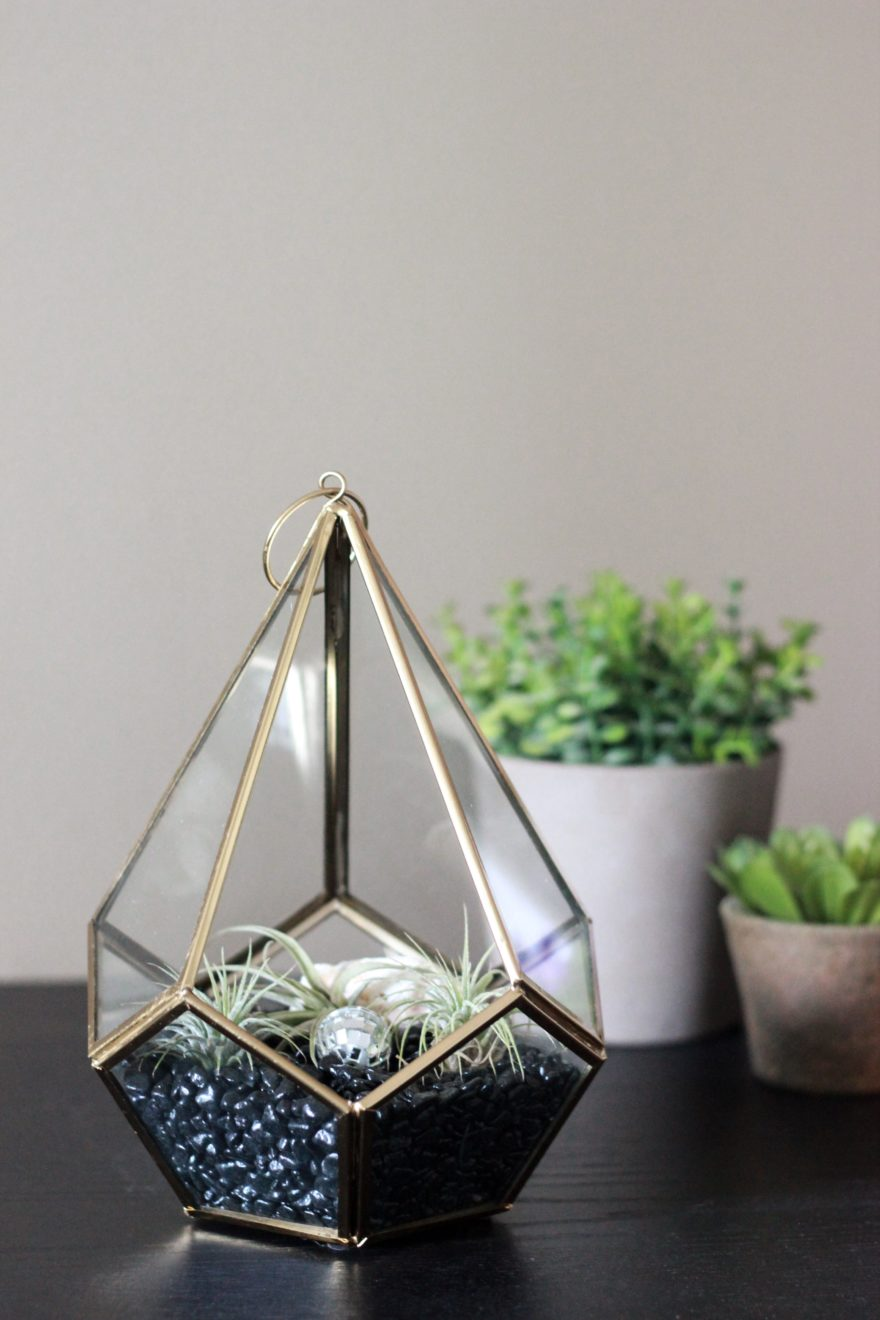 air plant terrarium sitting on a black shelf
